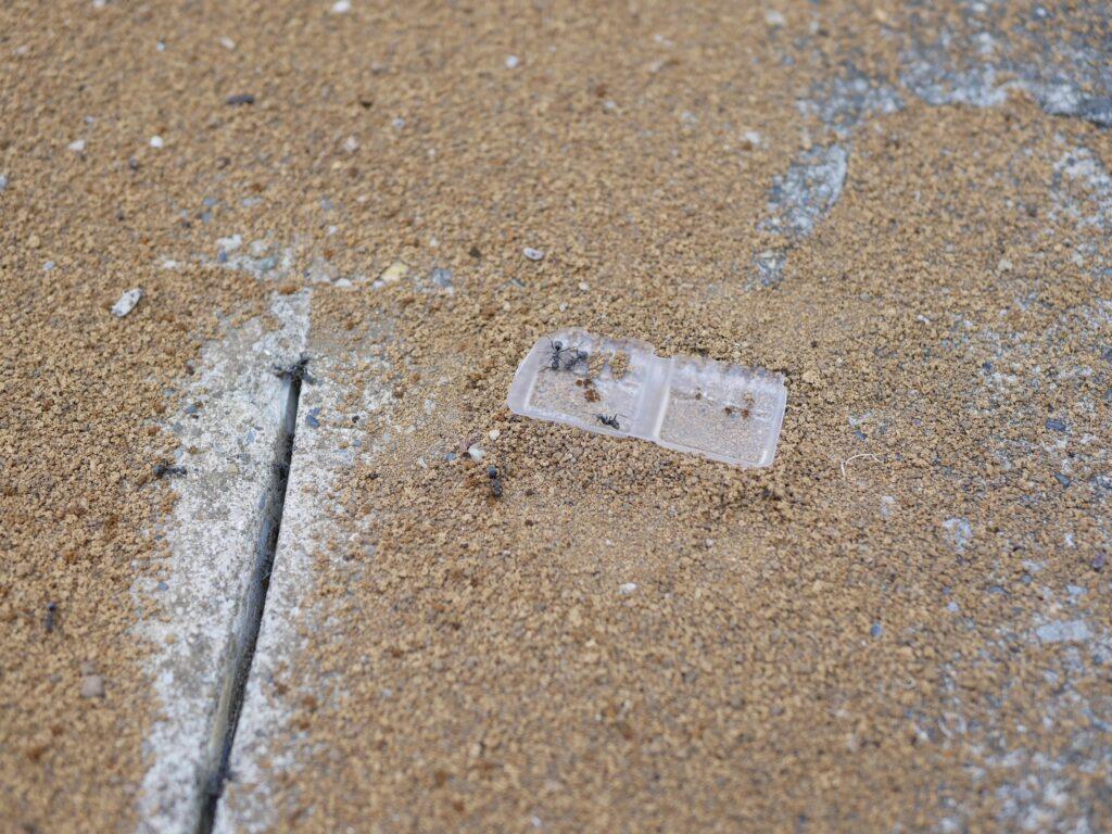 コンクリートのすき間の下にアリの巣がある